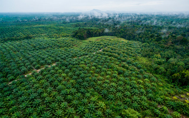 https://alugueseudrone.com.br/wp-content/uploads/2019/11/agricultura-1.jpg